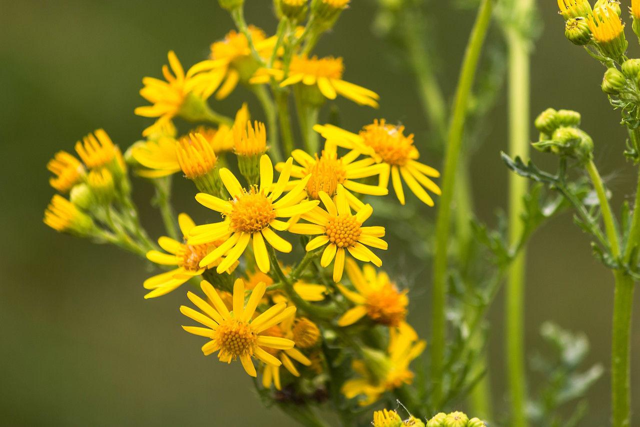 yellow flowers on green bokeh background