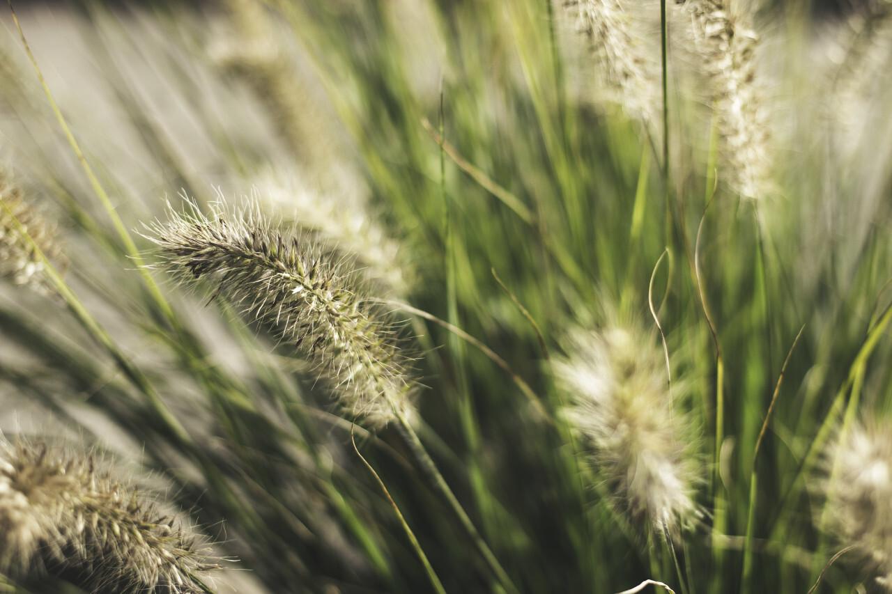 bokeh grass background