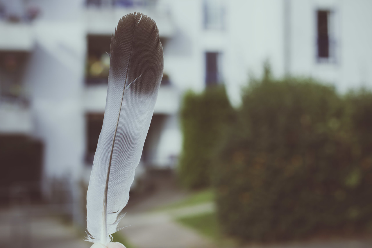 dove feather in a hand