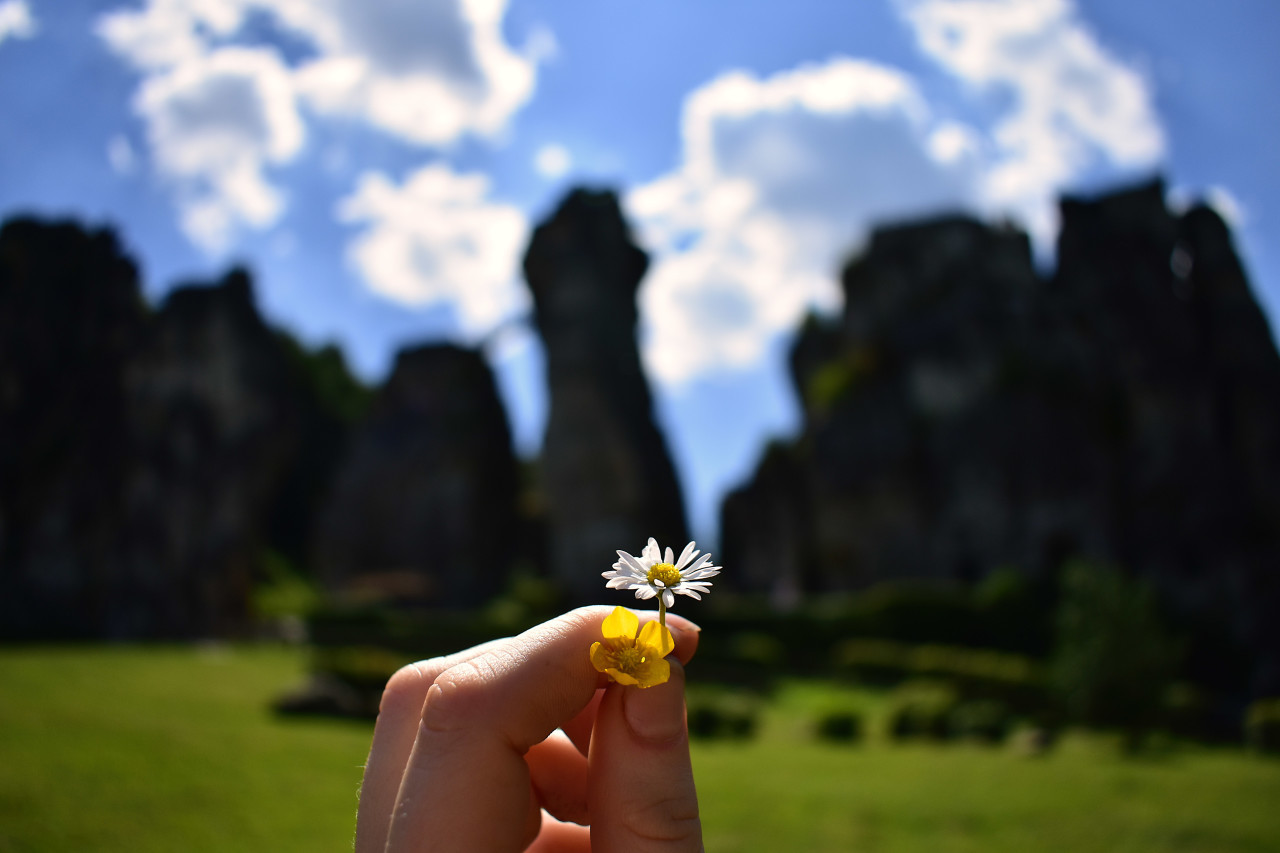 daisy and buttercup in hand - teutoburg forest
