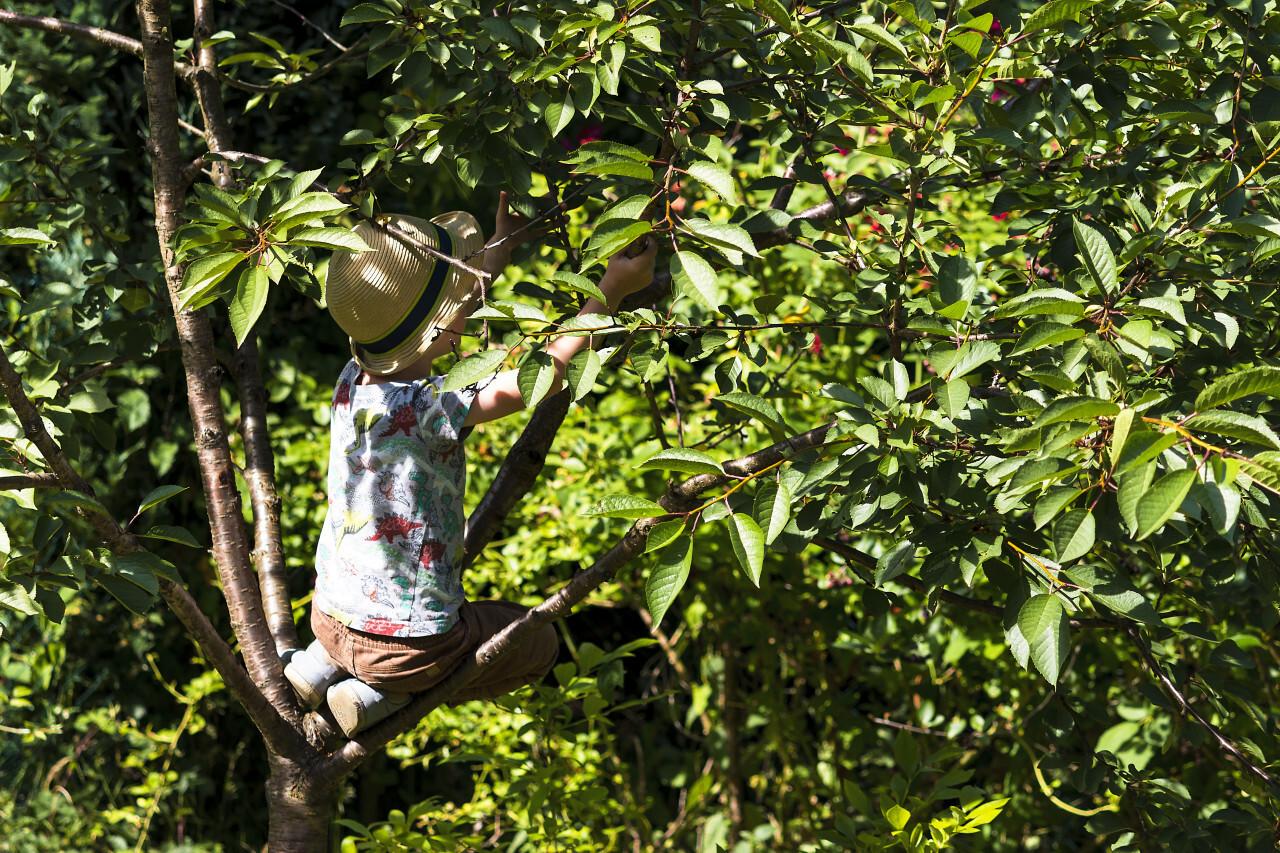 child climbs tree