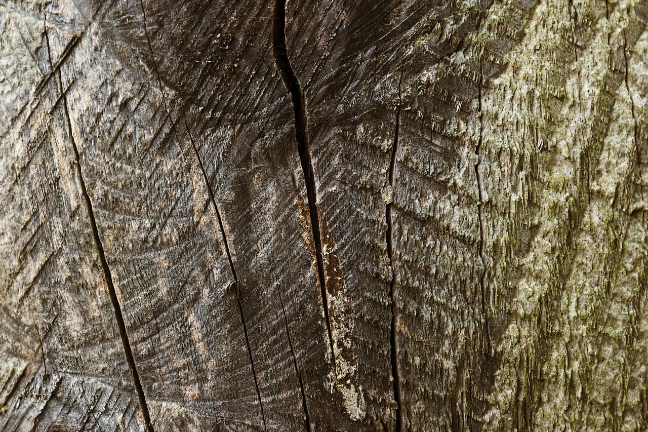 greenish brownish wood grain texture