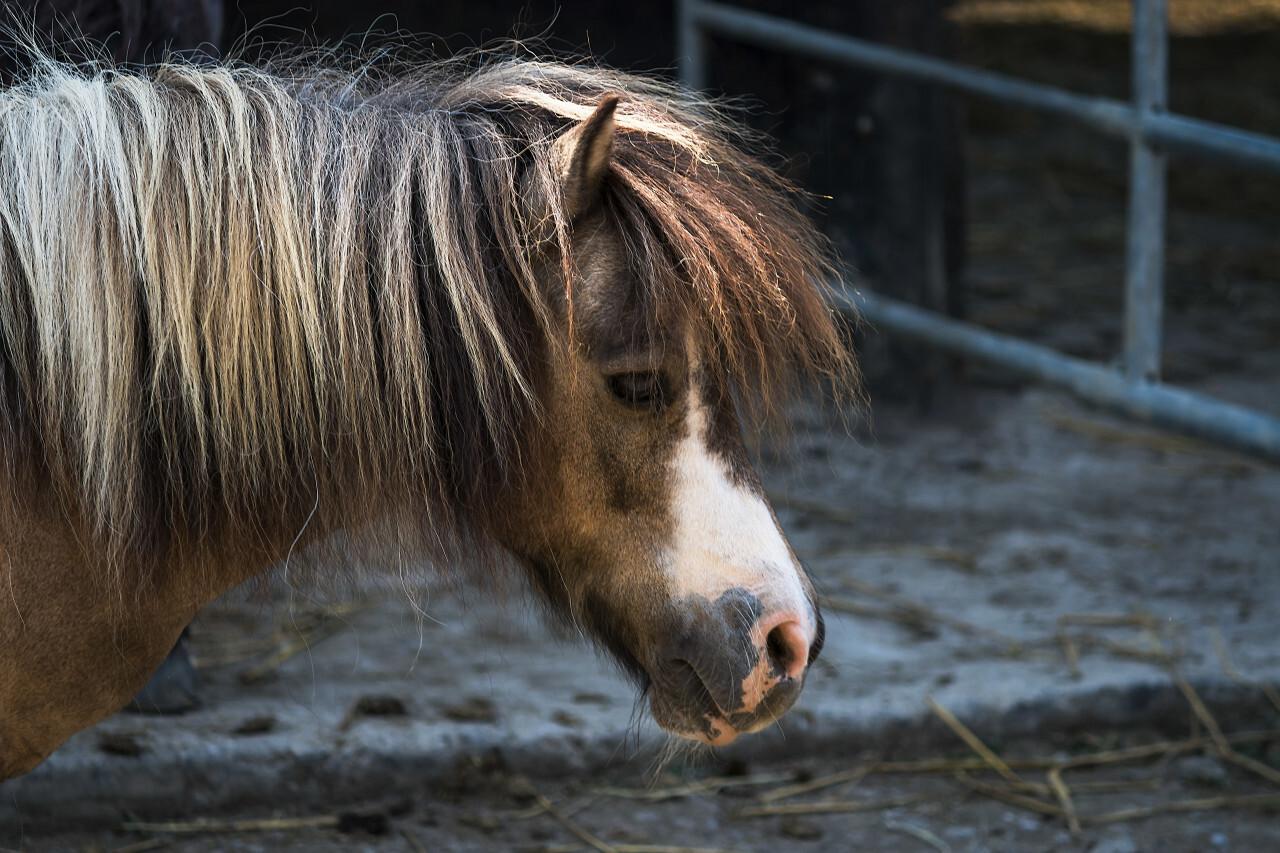 cute pony portrait