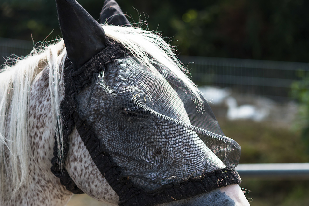 fly protection mask on horse