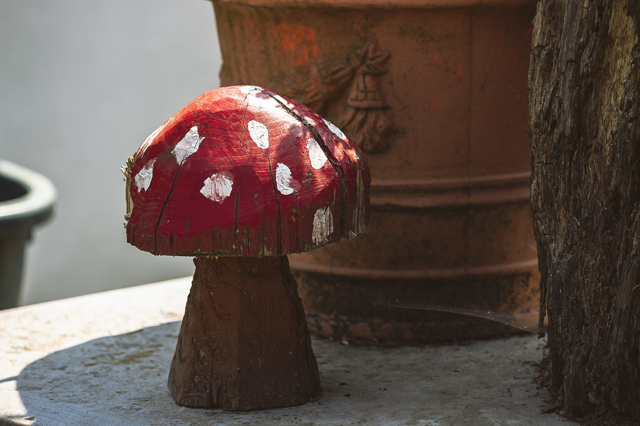 wooden fly agaric