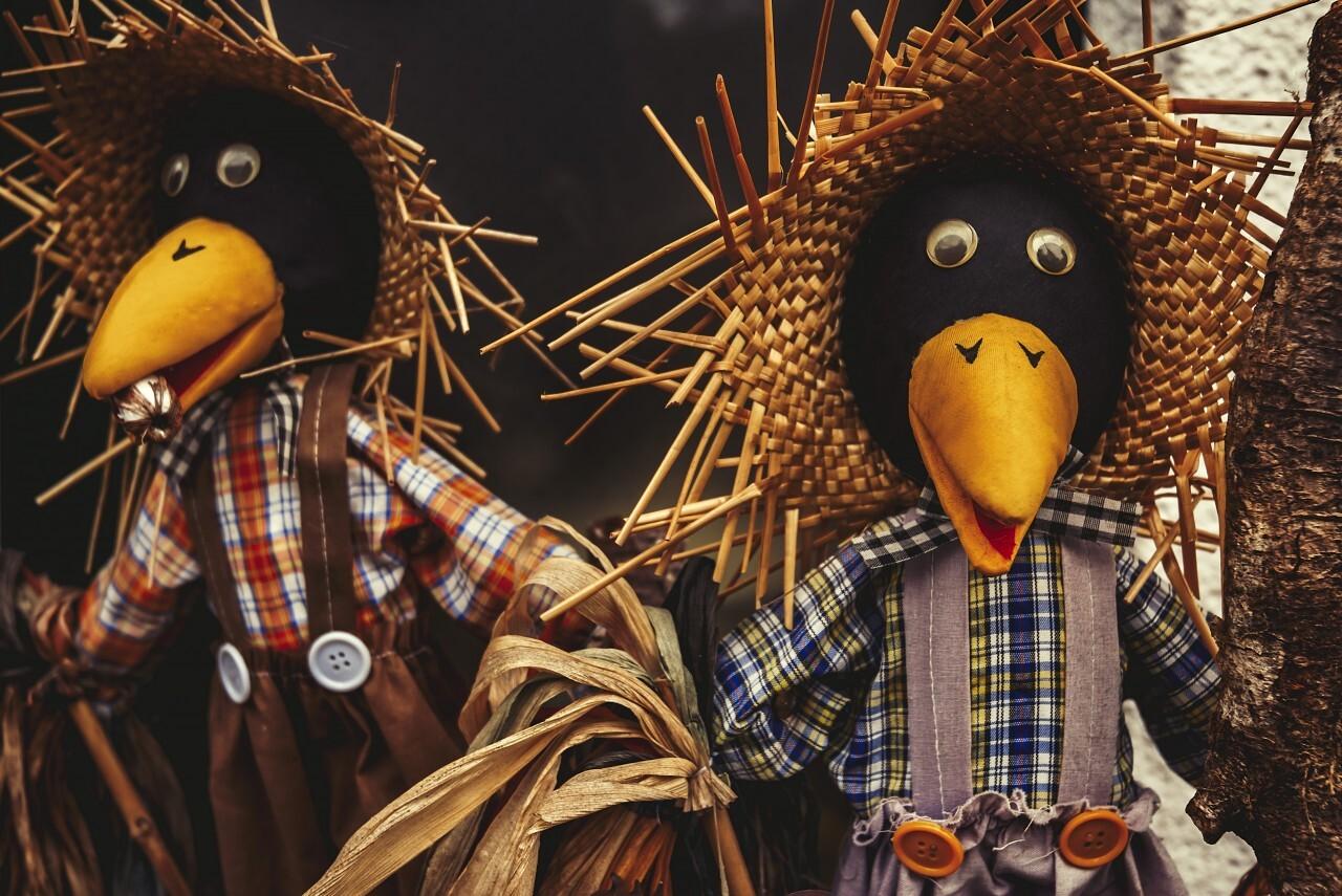 scarecrows ravens