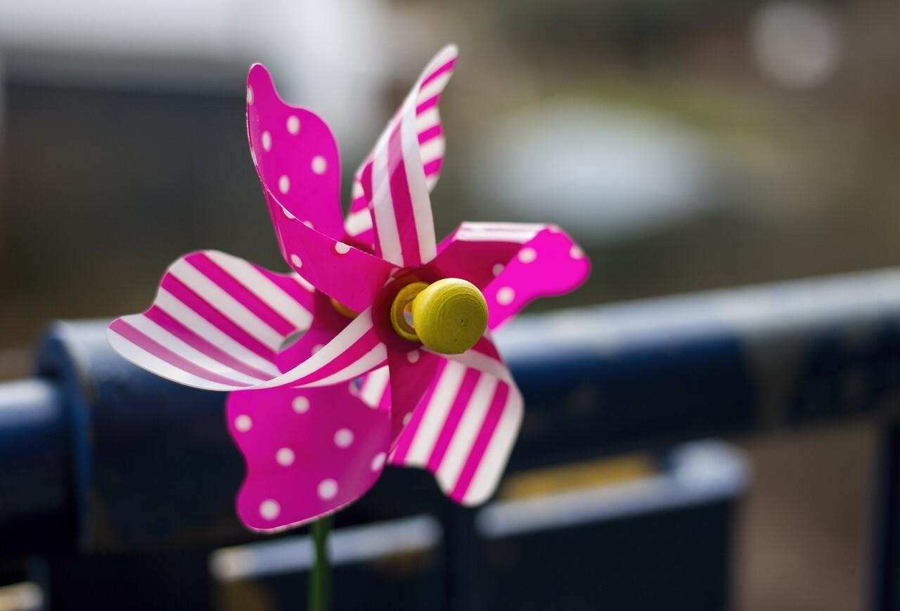 Pink toy pin wheel