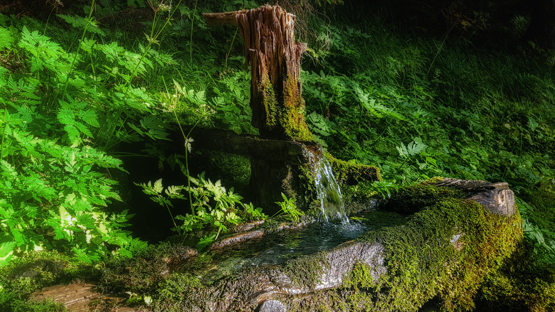 Forest spring well