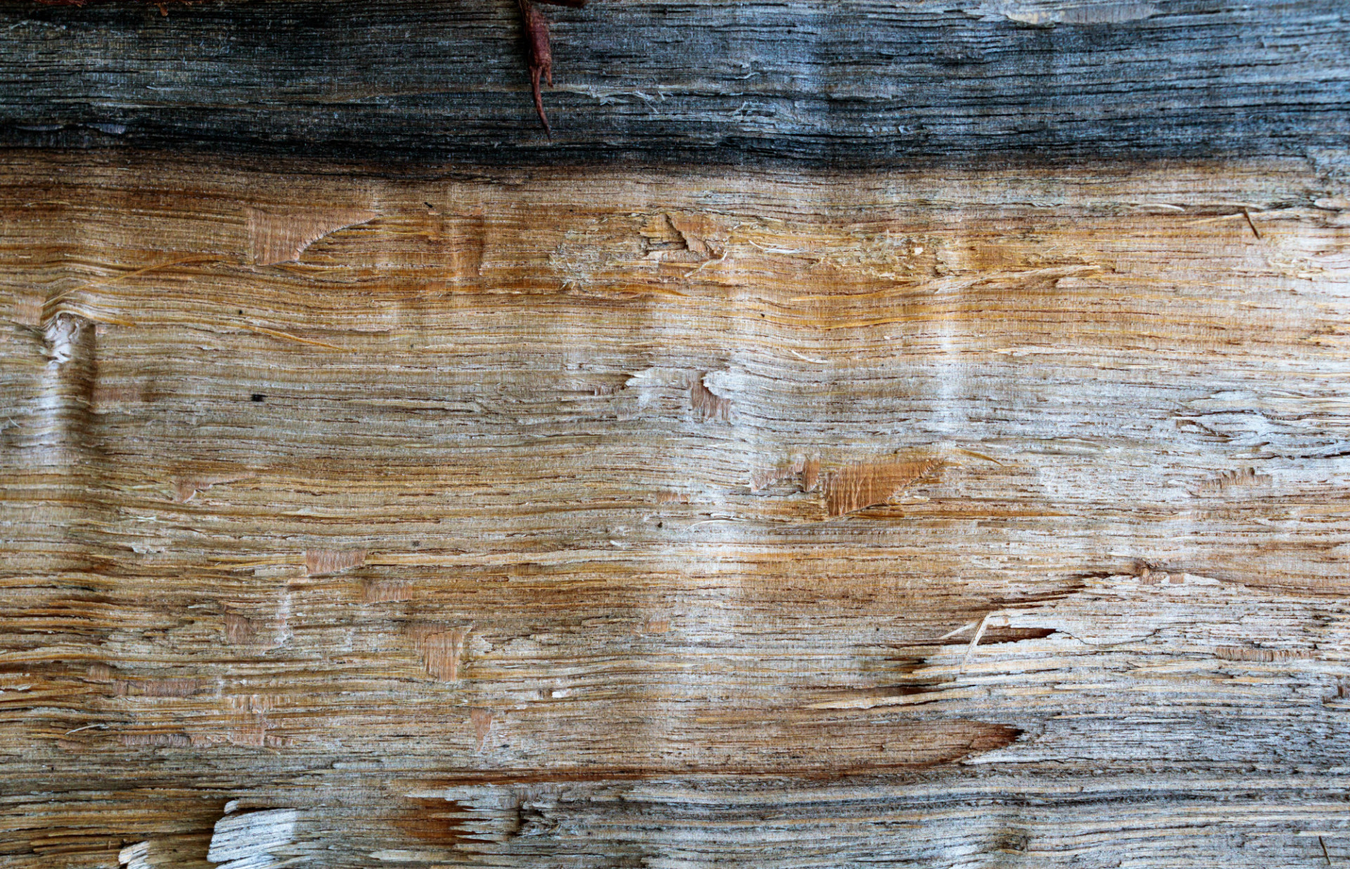 Grunge natural wood texture