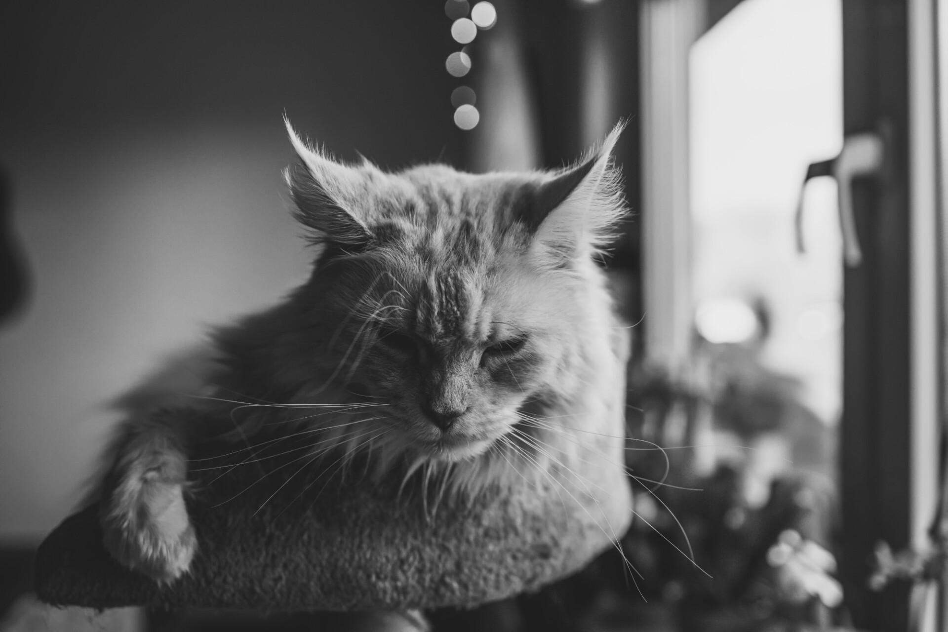 Cat lies on scratching post