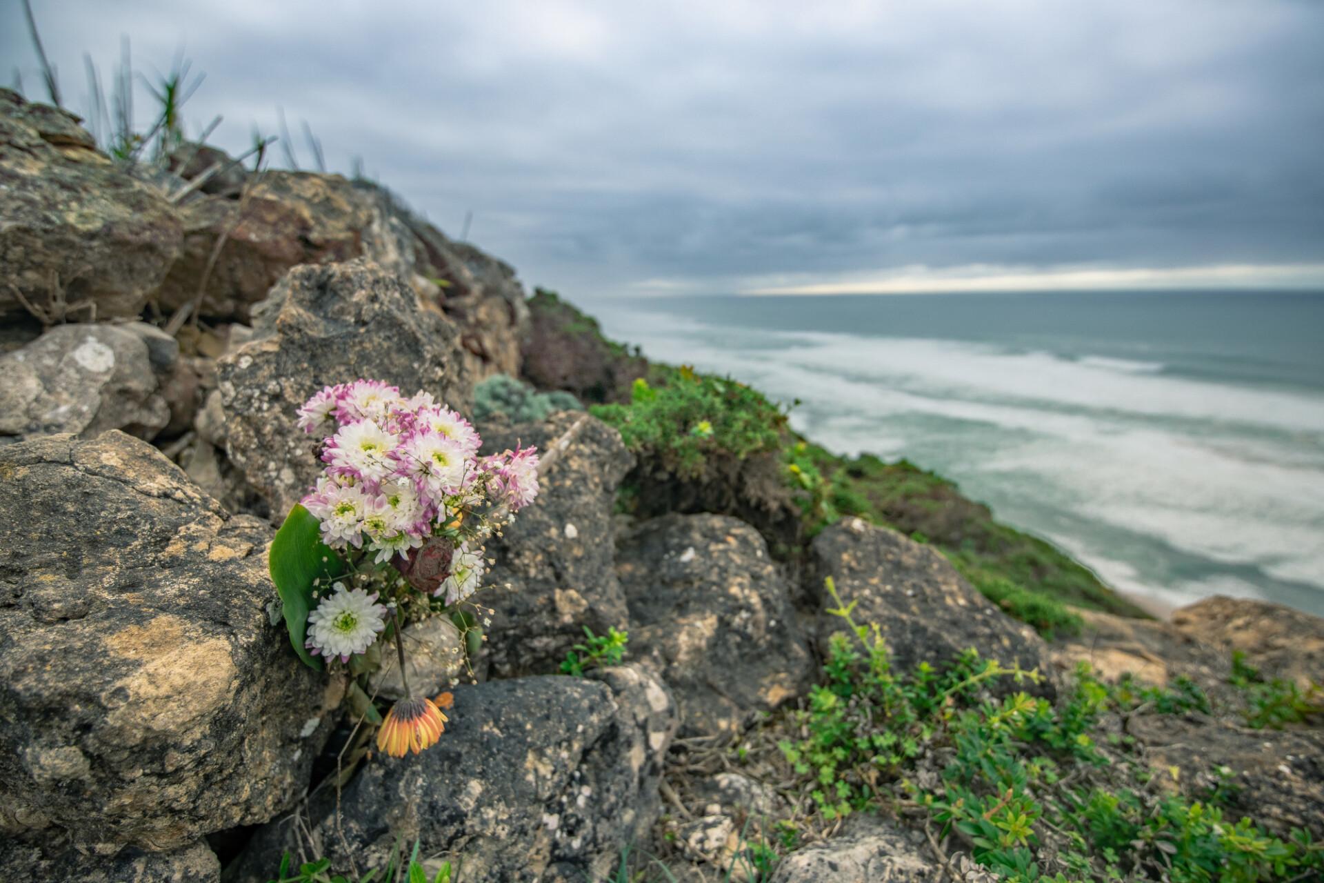 Flower on Magoitos beach