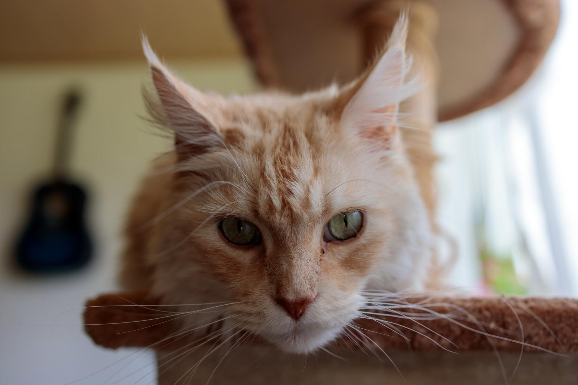 Cute lying domestic cat