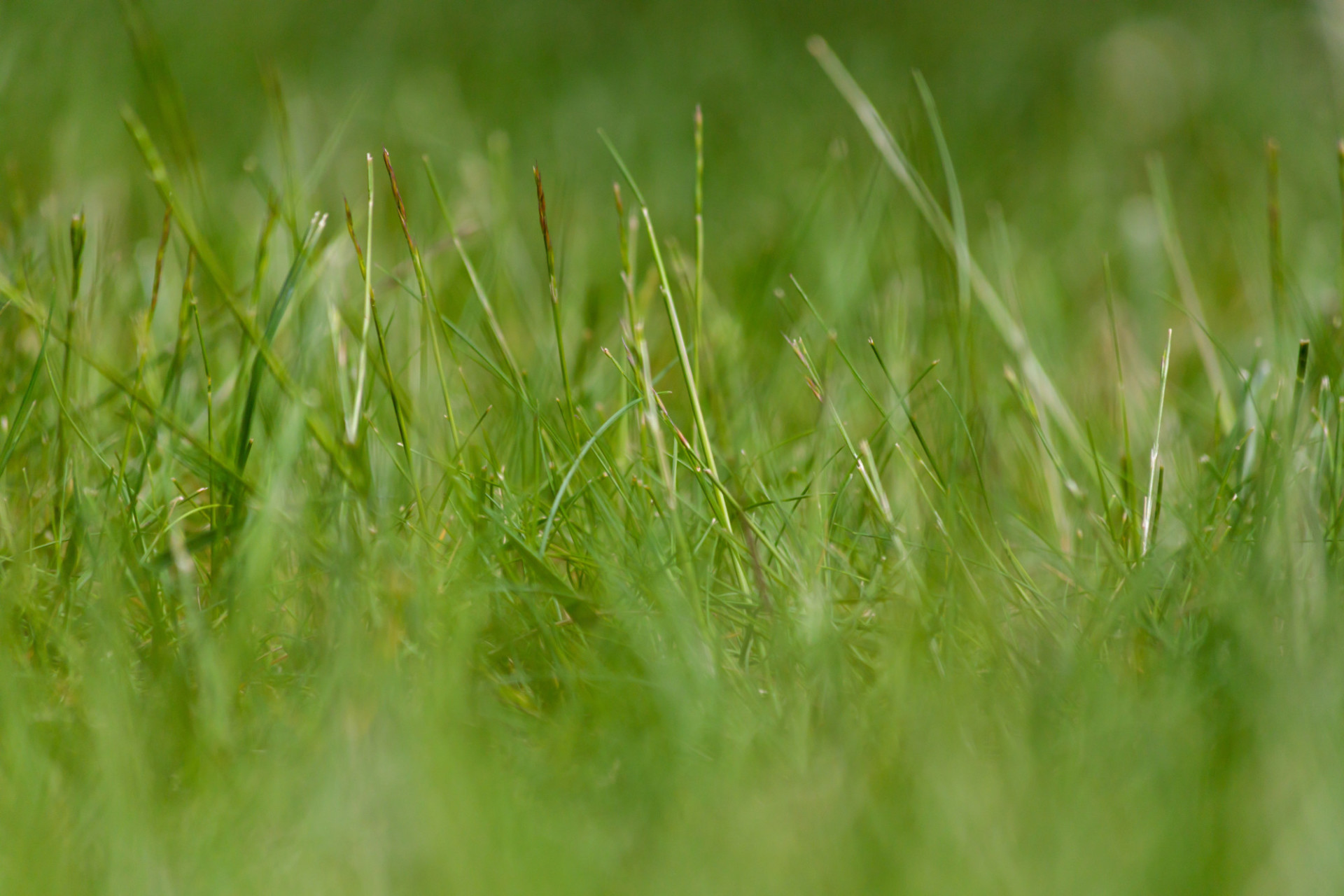 Green Meadow Background