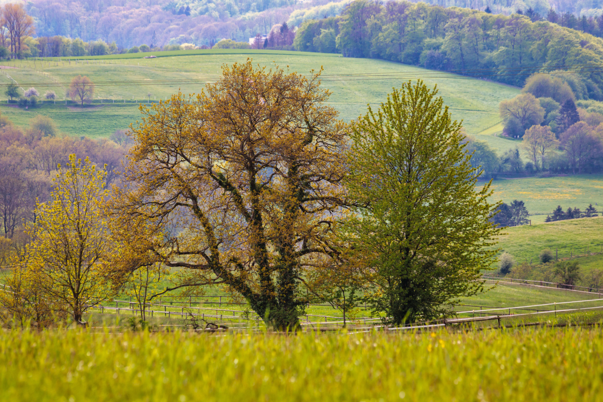 Trees on a rural Landscape