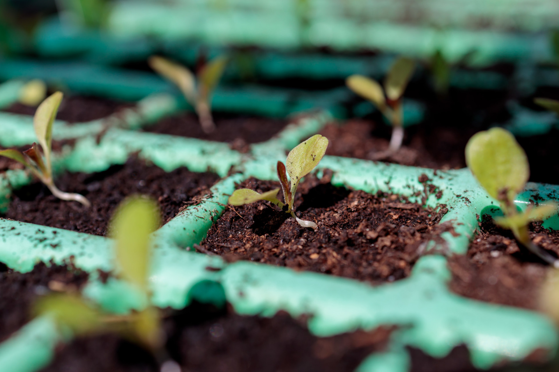 Grow seedlings