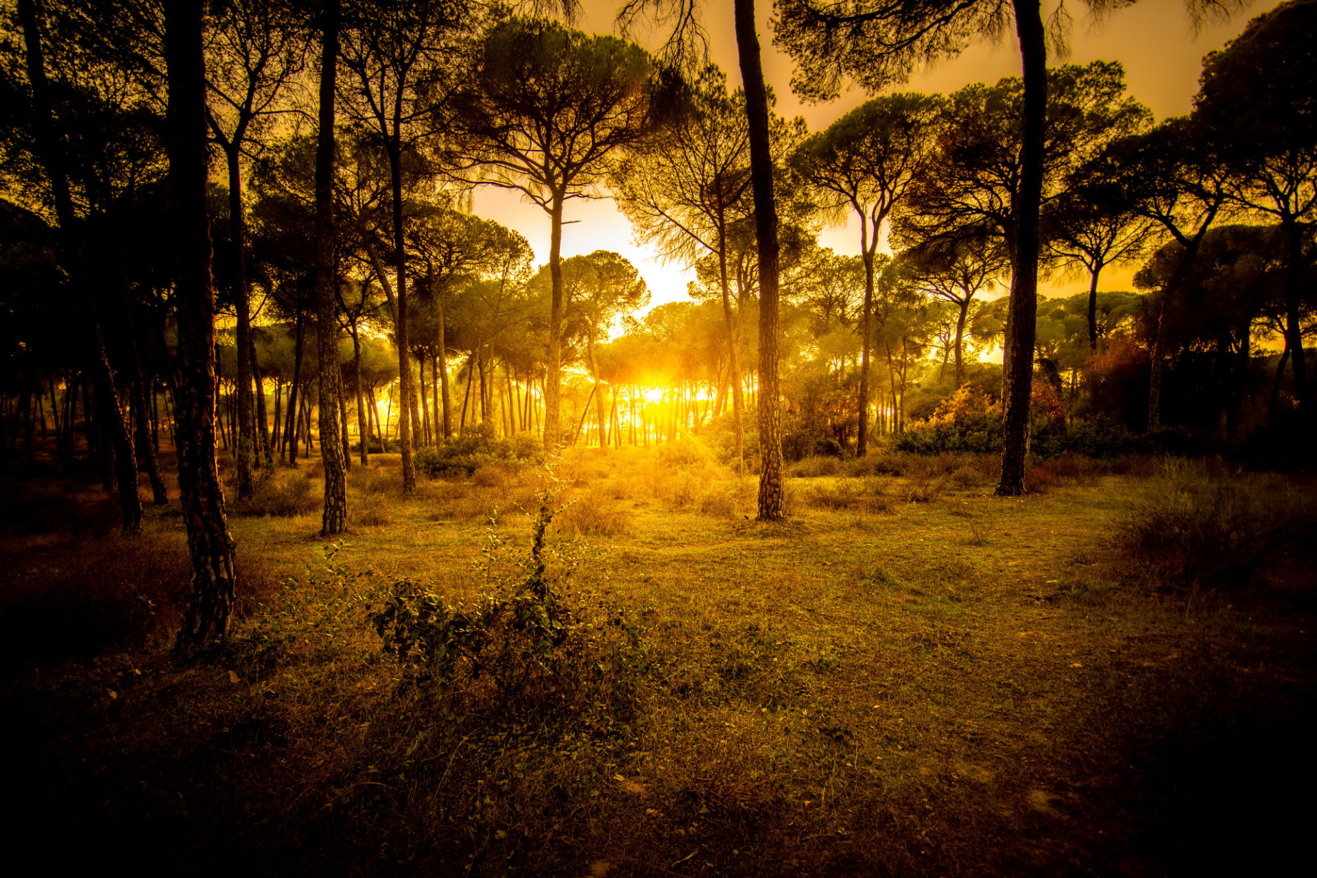 Andalusia forest landscape golden sunset