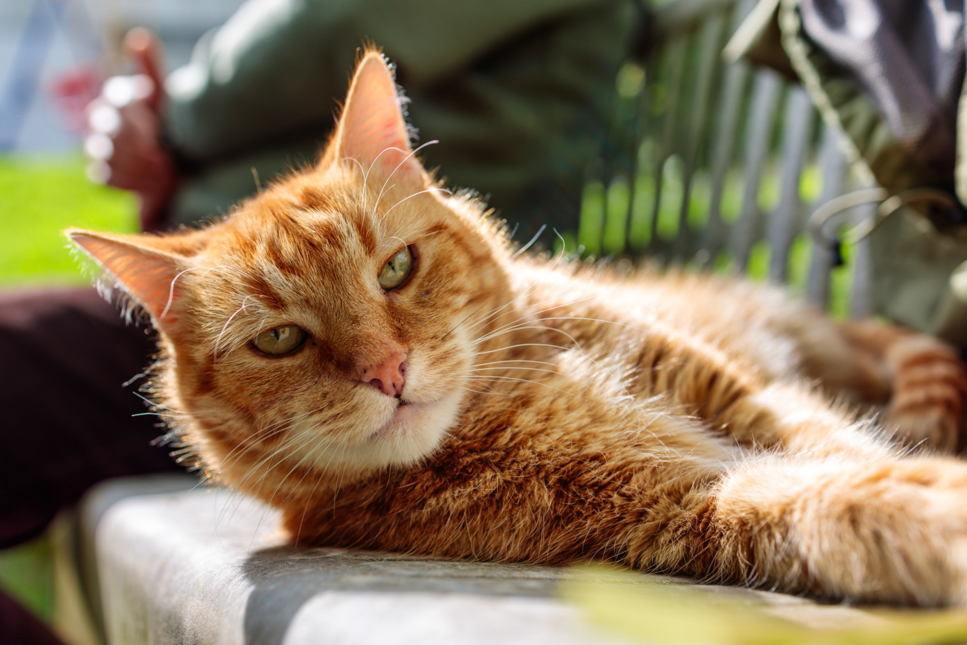 Red cat on a bench in the garden