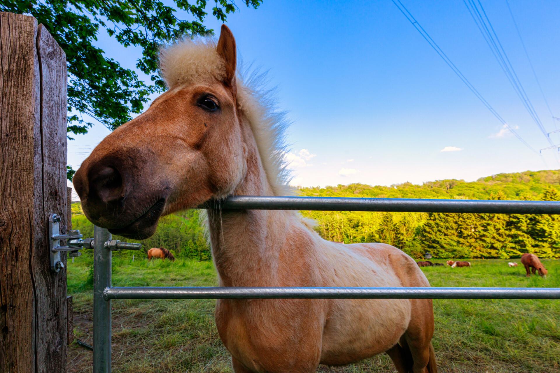 Portrait of a curious pony