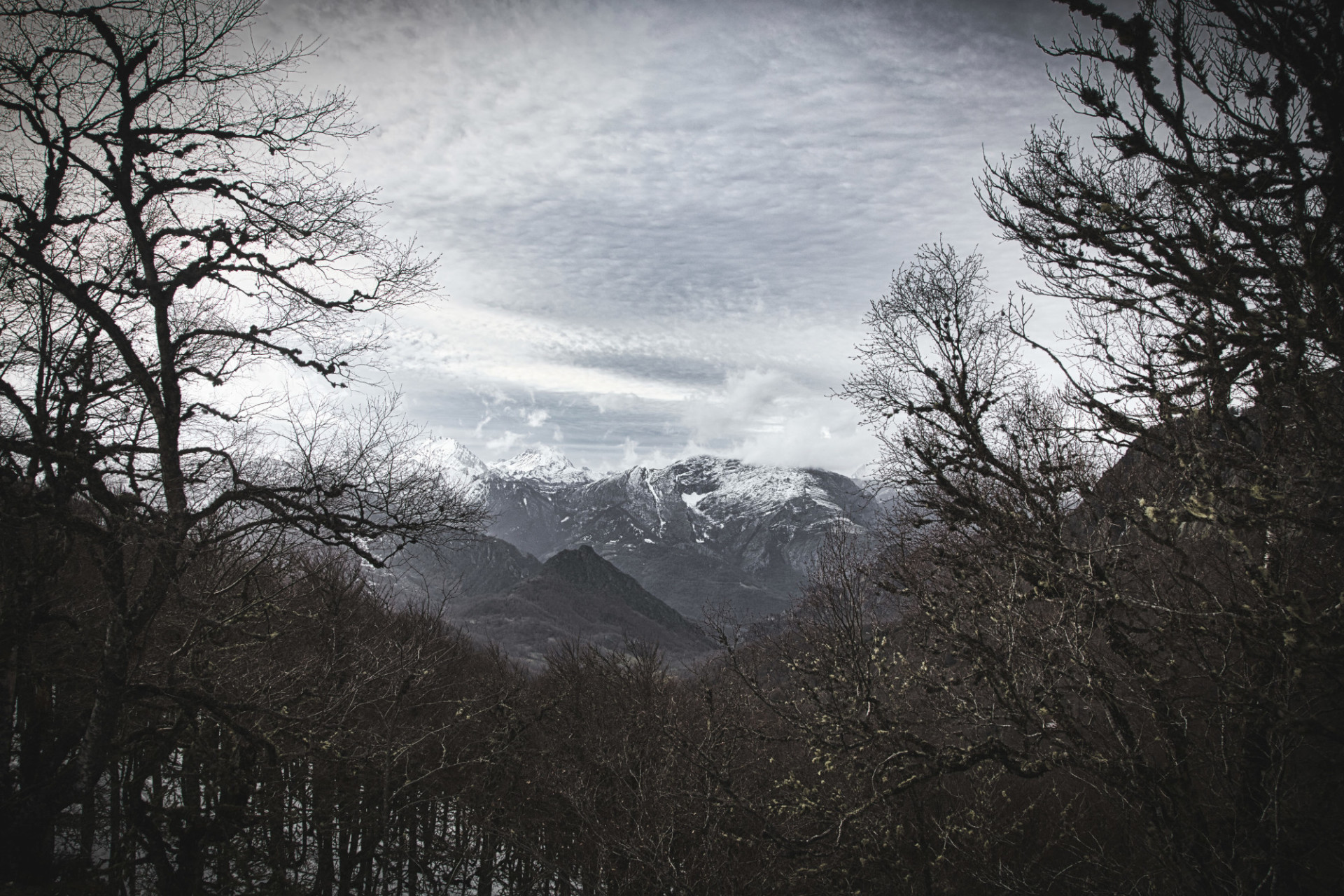 View of the mountains from the forest