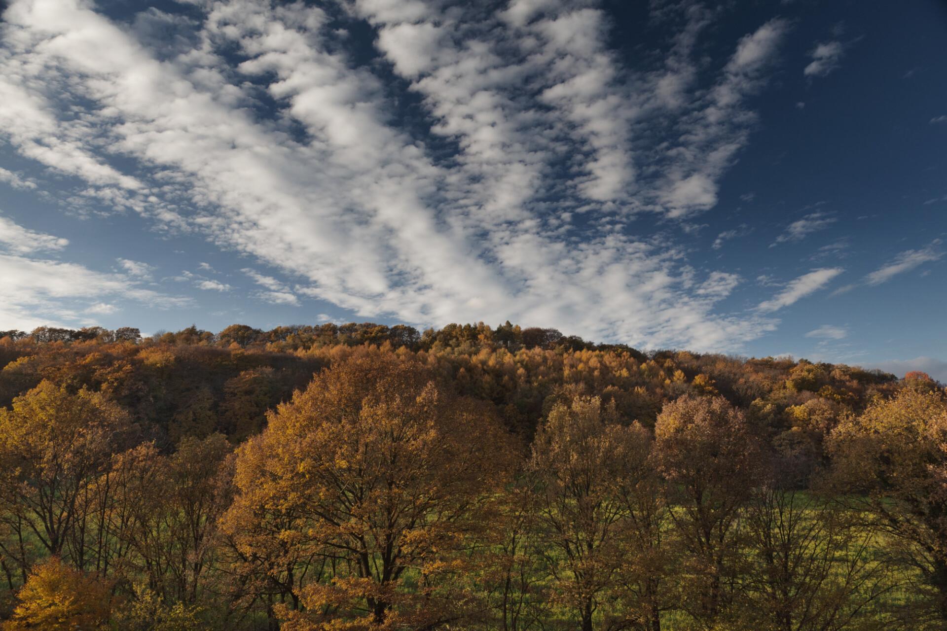forest landscape autumn