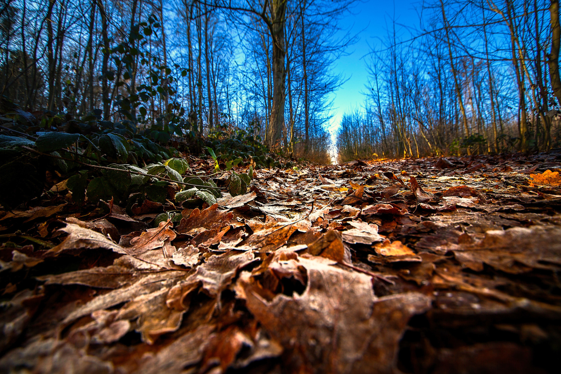 forest path covered with leaves