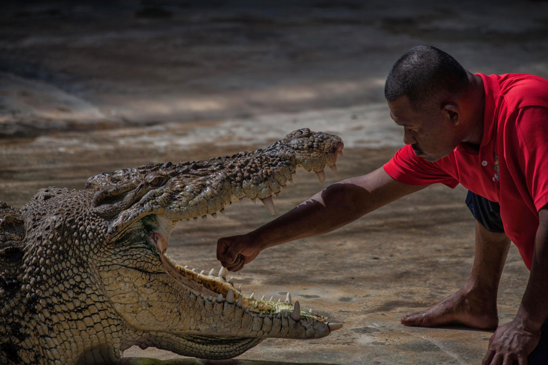 Man holding his arm in the mouth of a crocodile