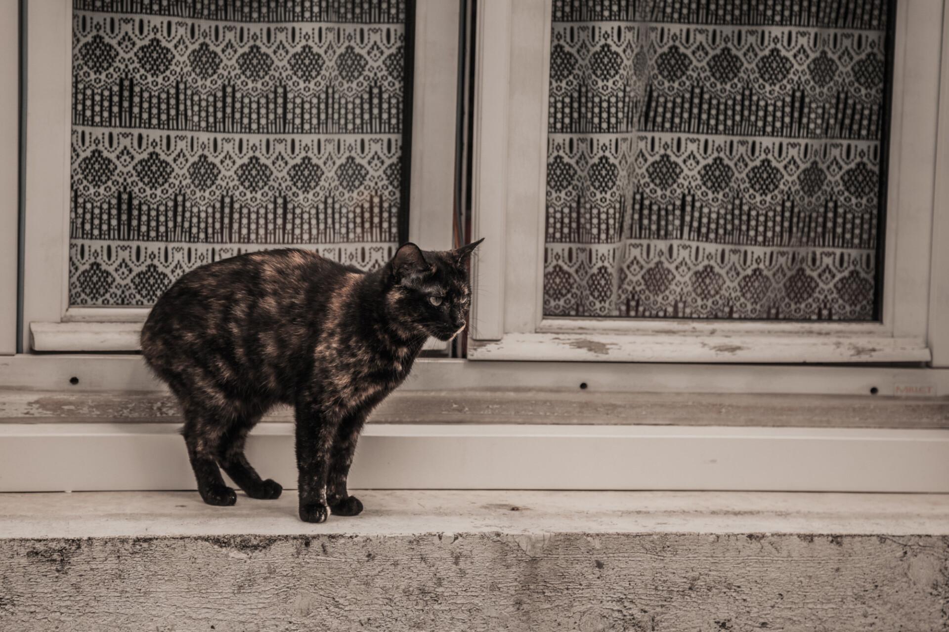 street cat on windowsill