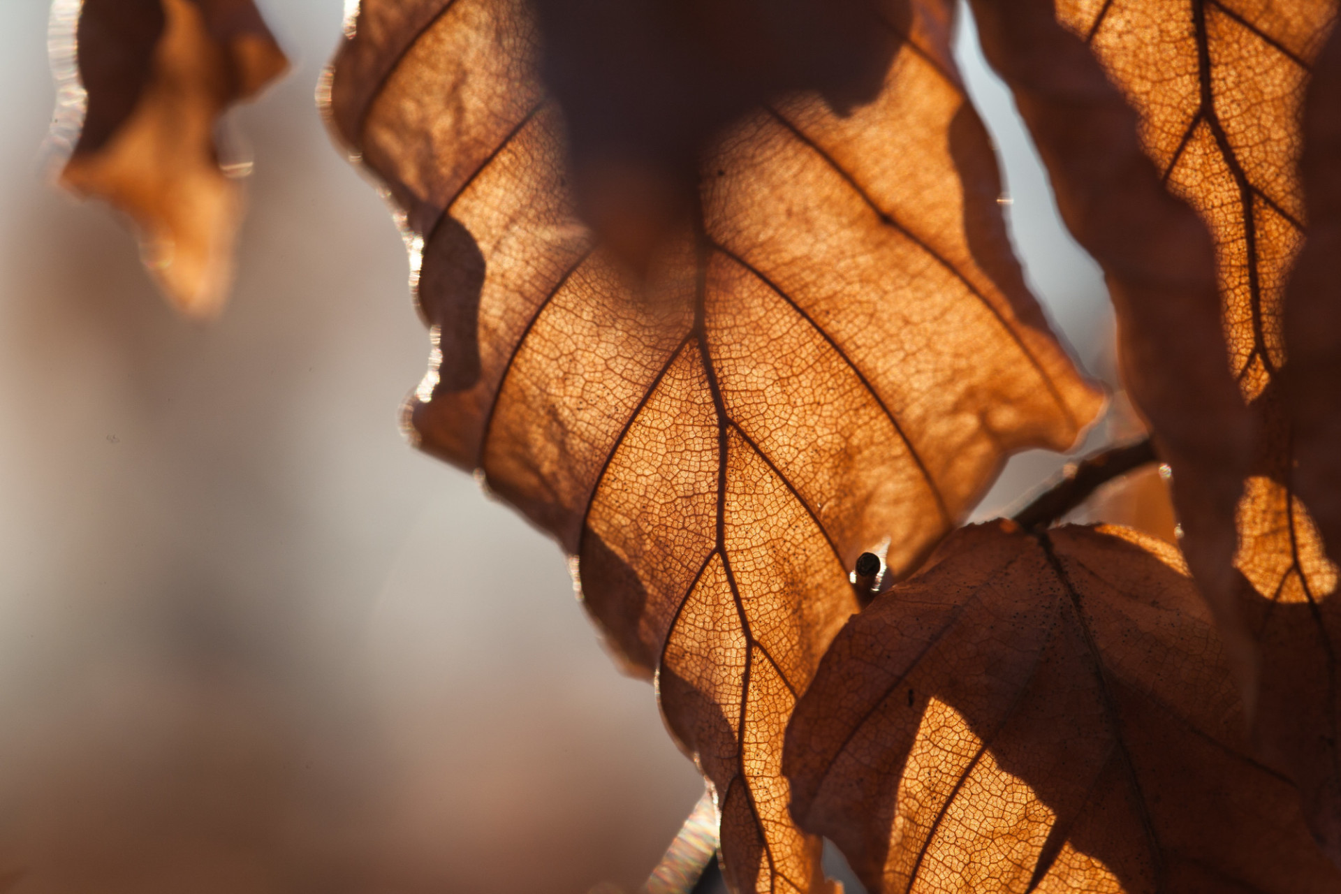 Withered autumn leaves