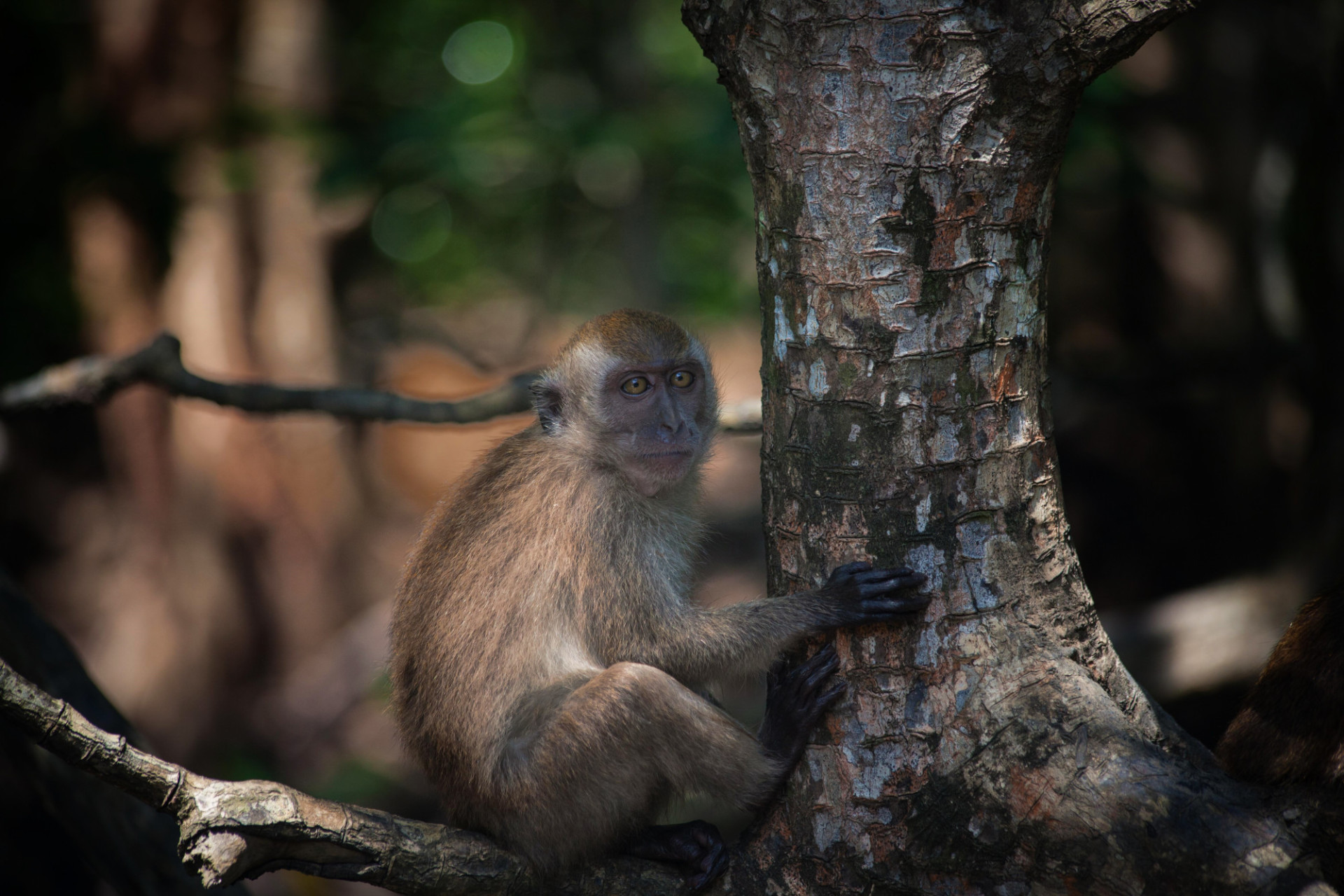 Baboon sitting on a tree