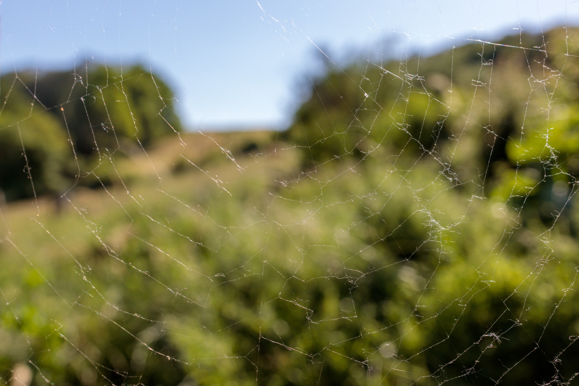 Spider's web in front of a lush green landscape