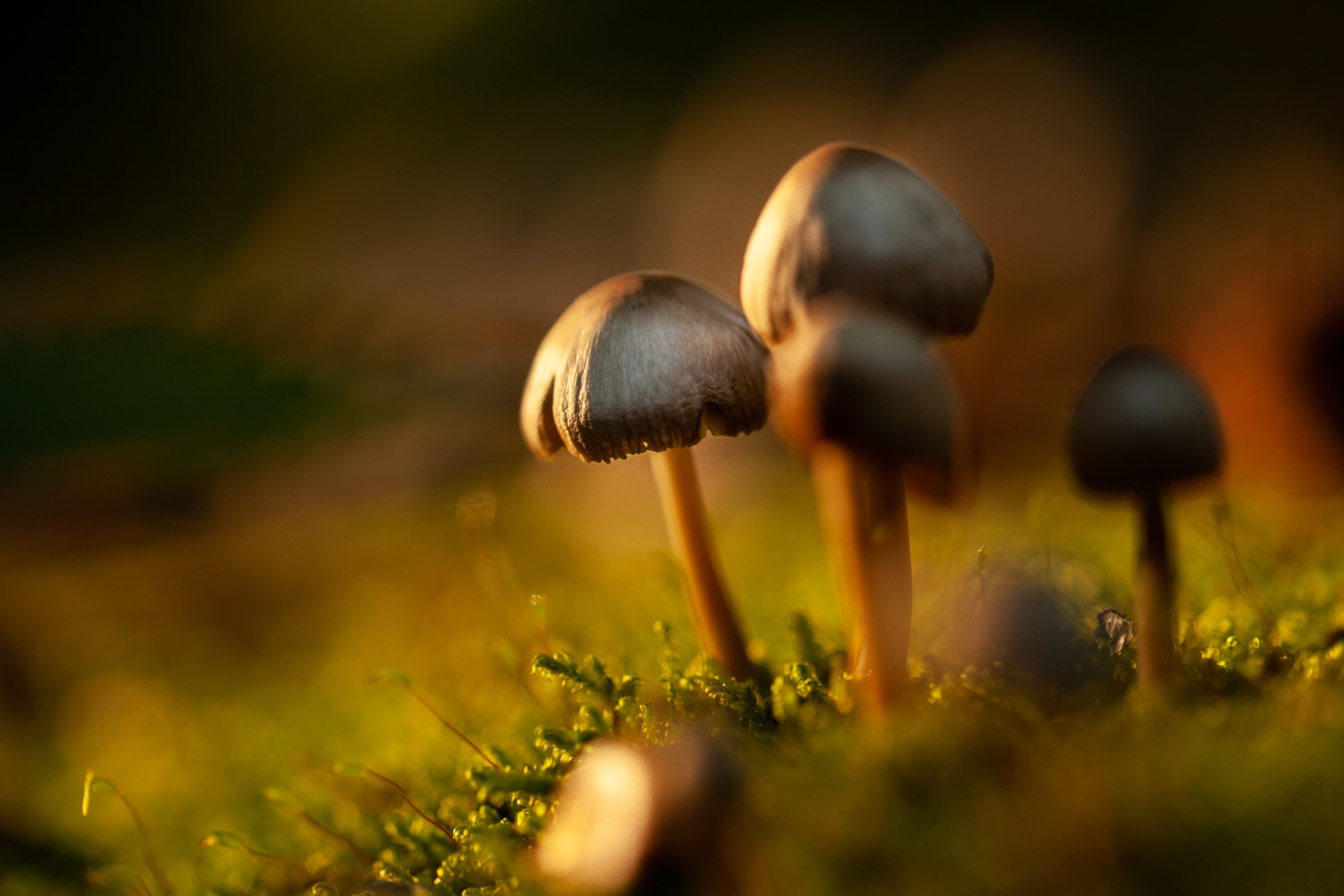 Mushrooms in the German Forest