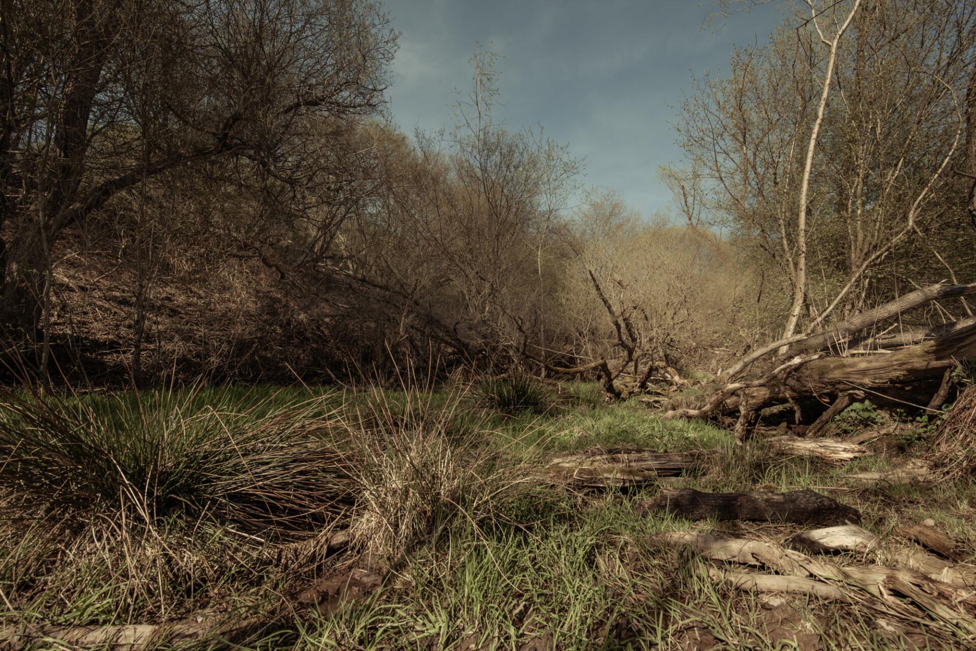 Gloomy marshlands