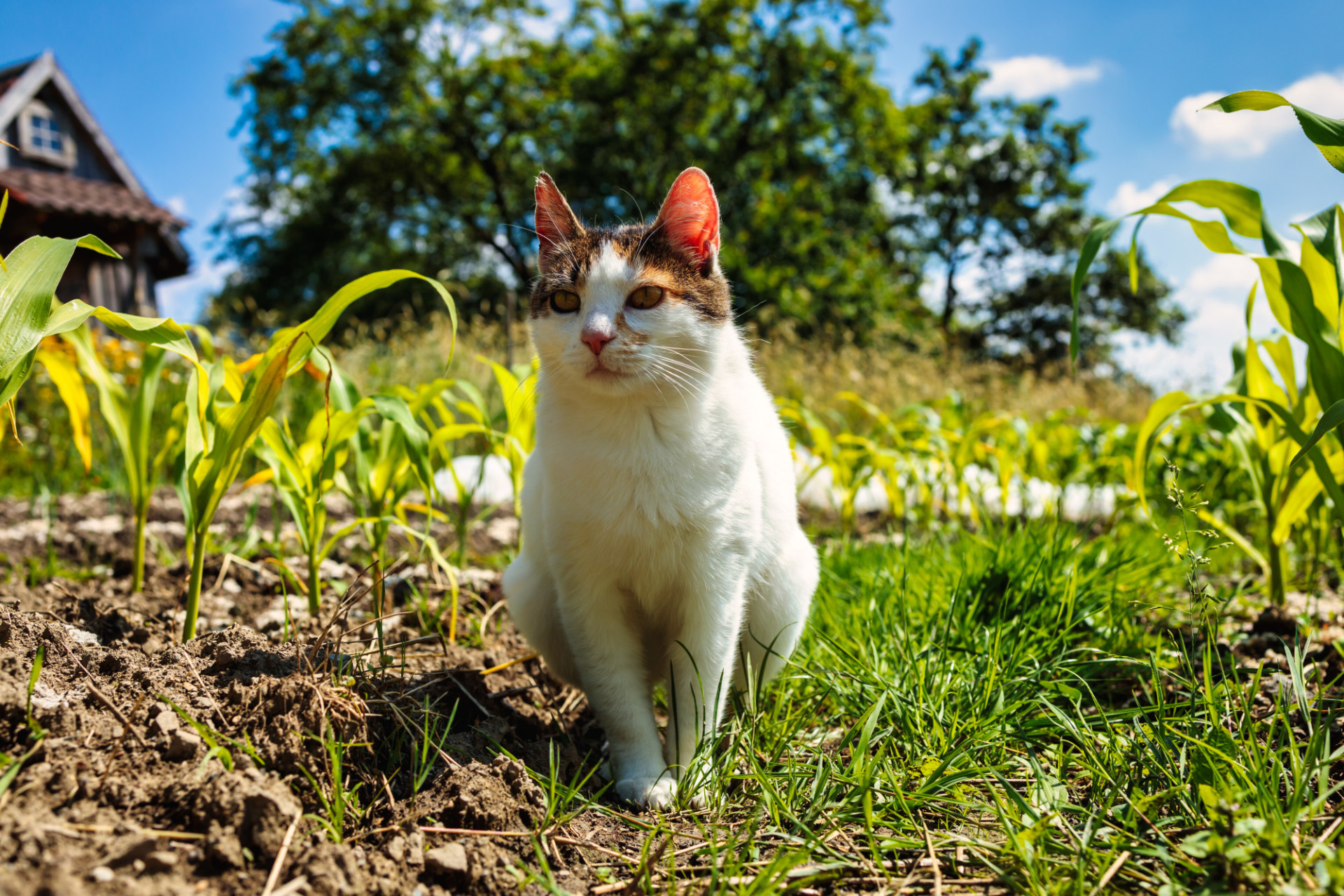 Domestic cat sitting in the garden