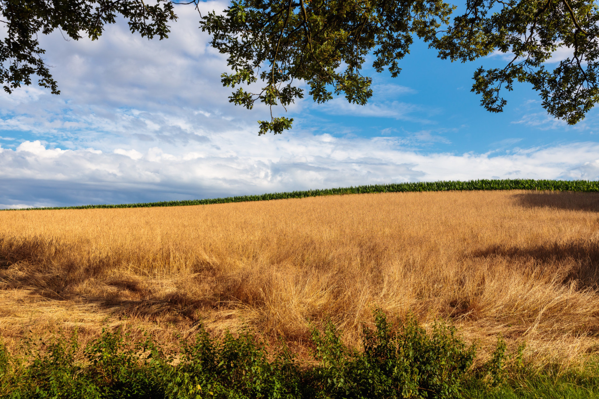 Beautiful rural landscape in europe