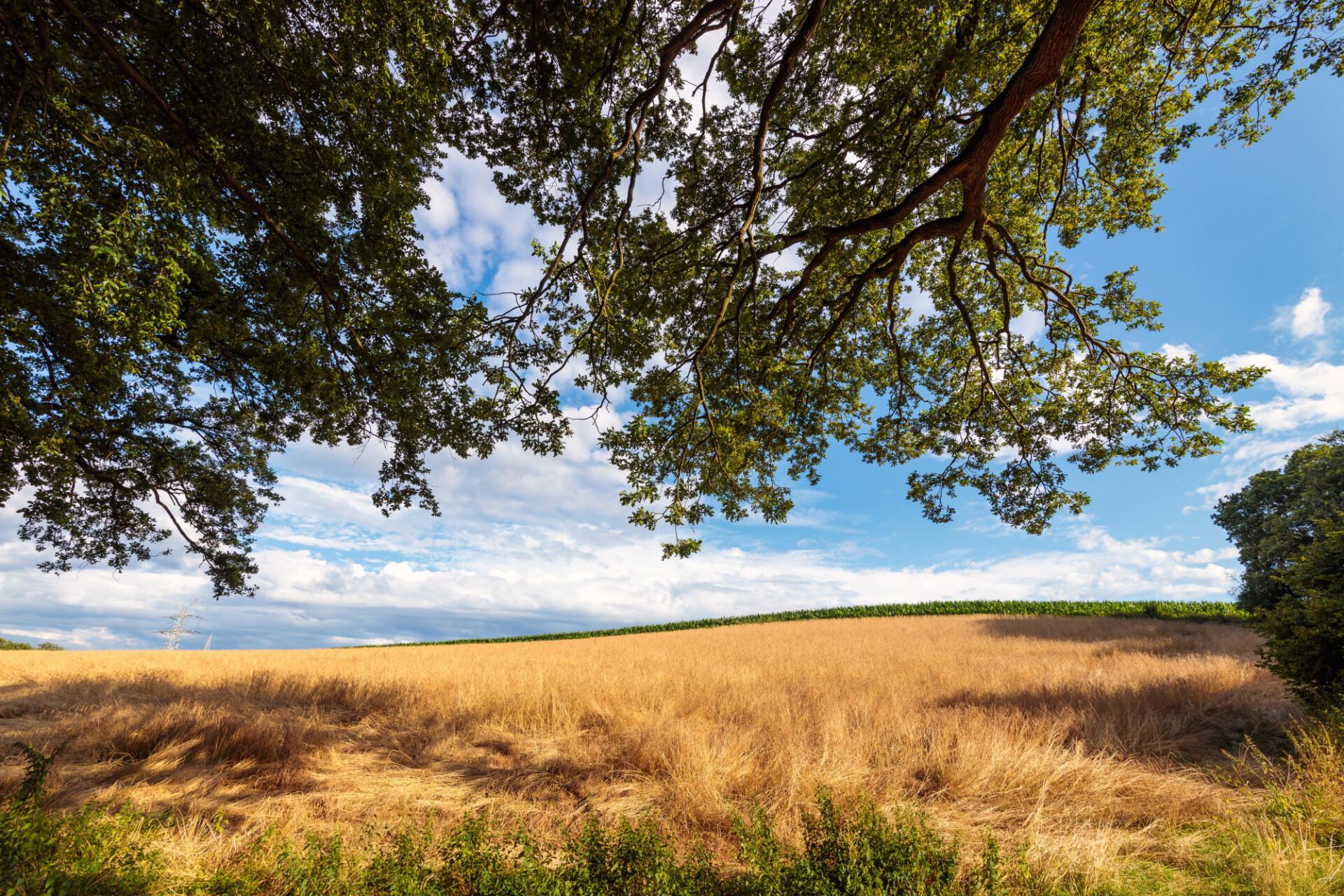 Beautiful rural landscape in northern europe