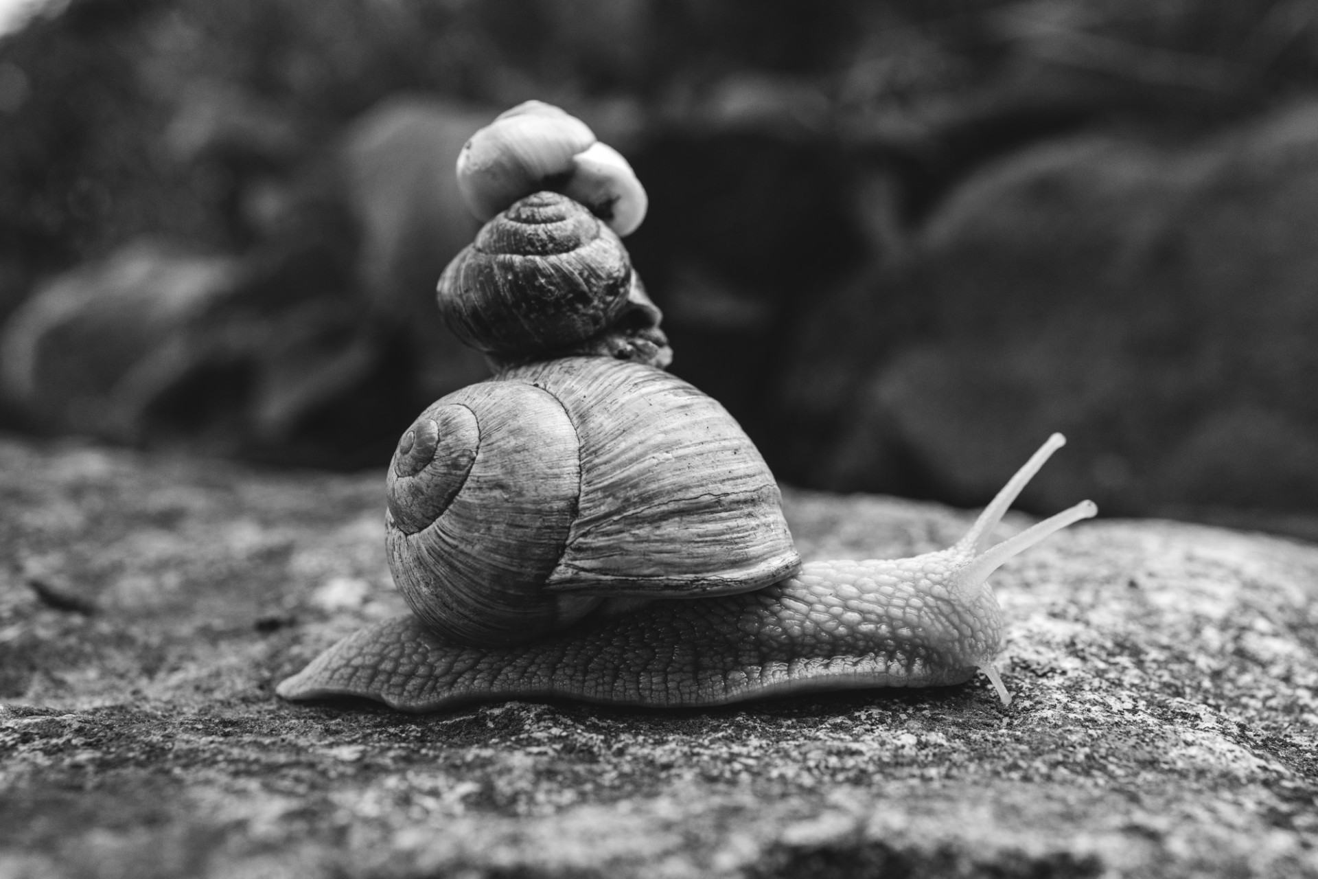 Three snails stacked on top of each other