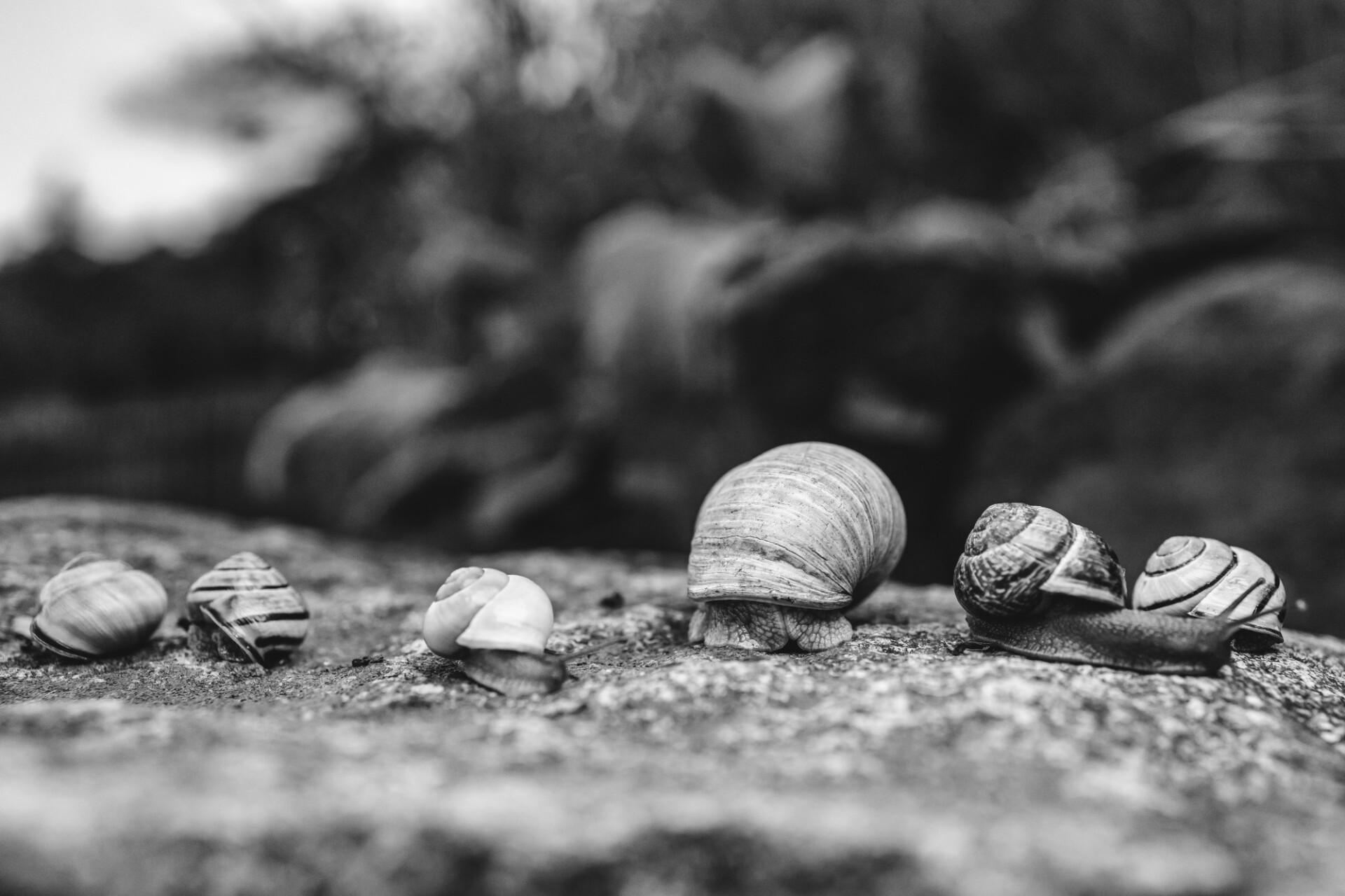 Six snails lying side by side