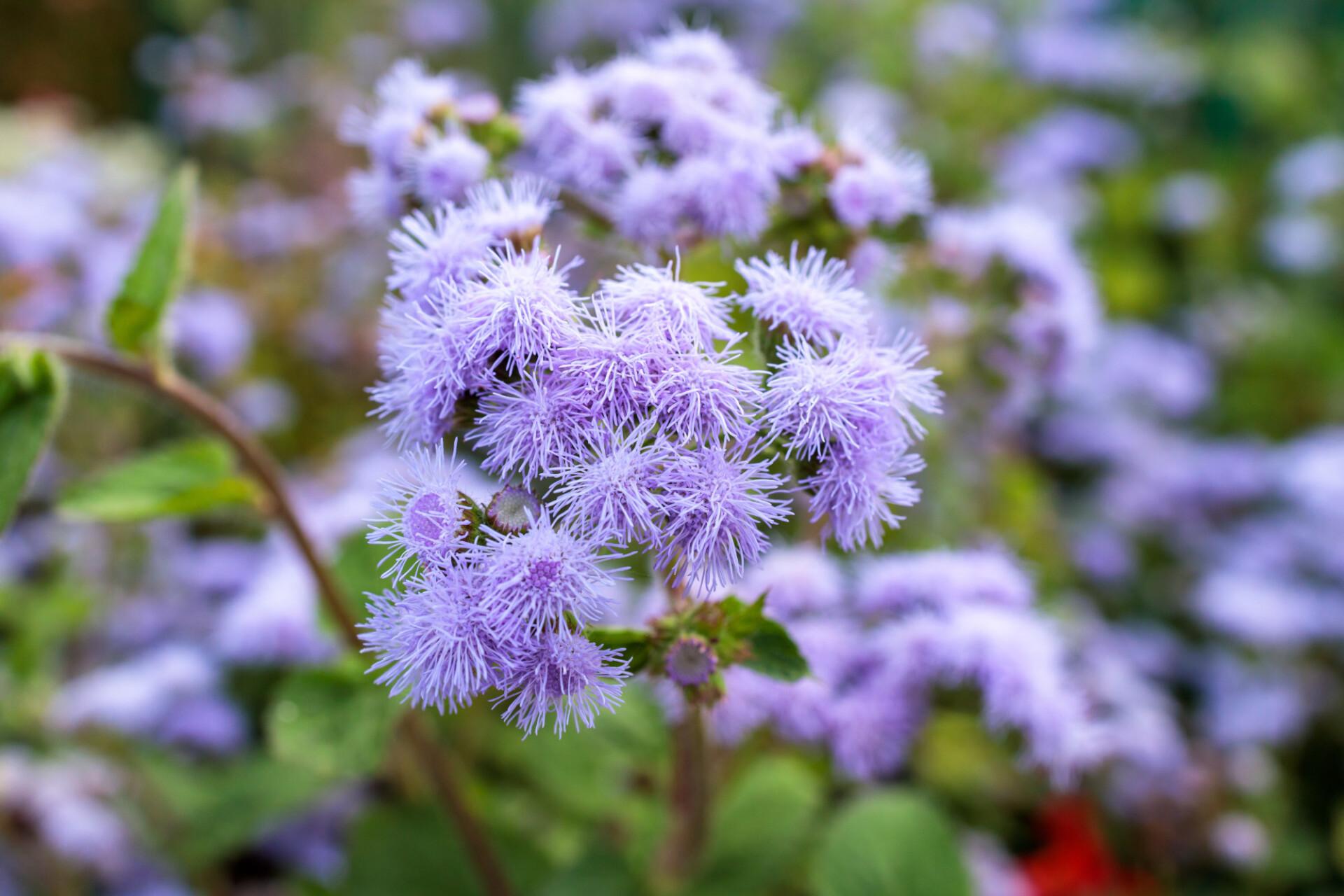 Interesting looking aster flower