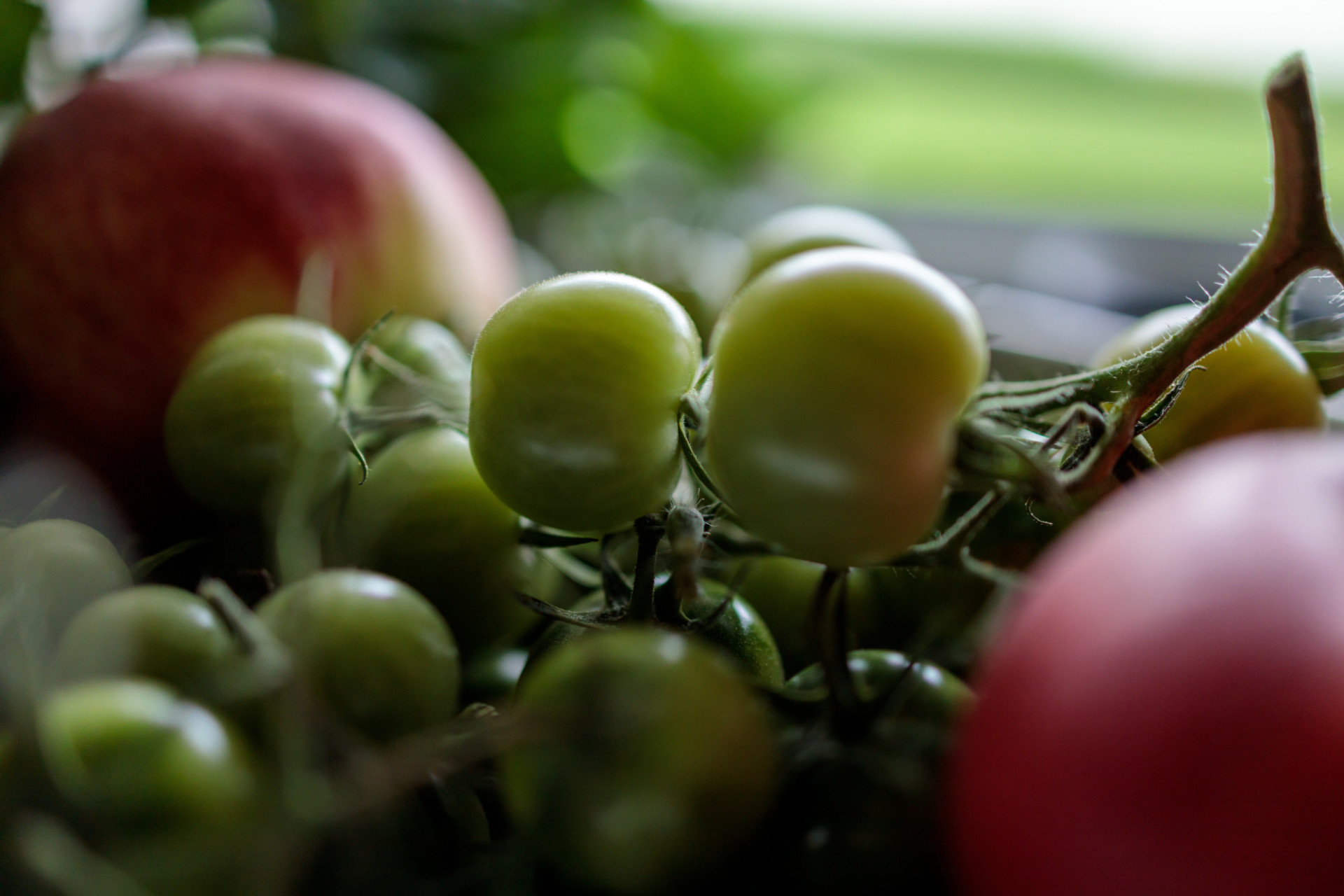 Green tomatoes are ripening on the windowsill