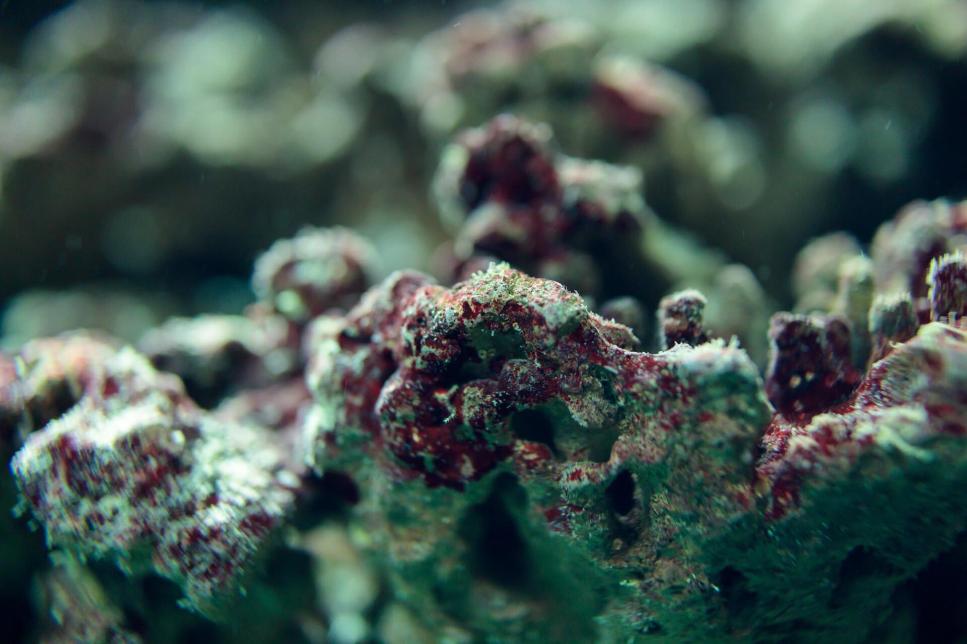 corals background