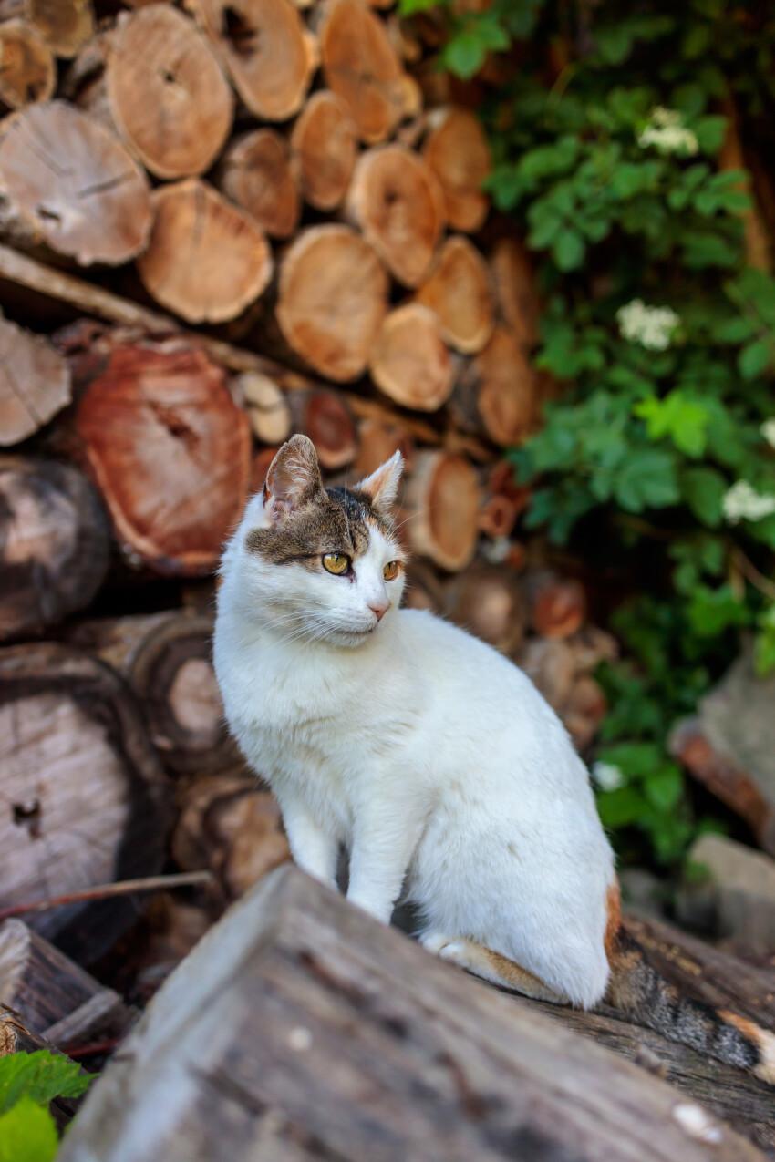 Cute cat sitting on a tree trunk