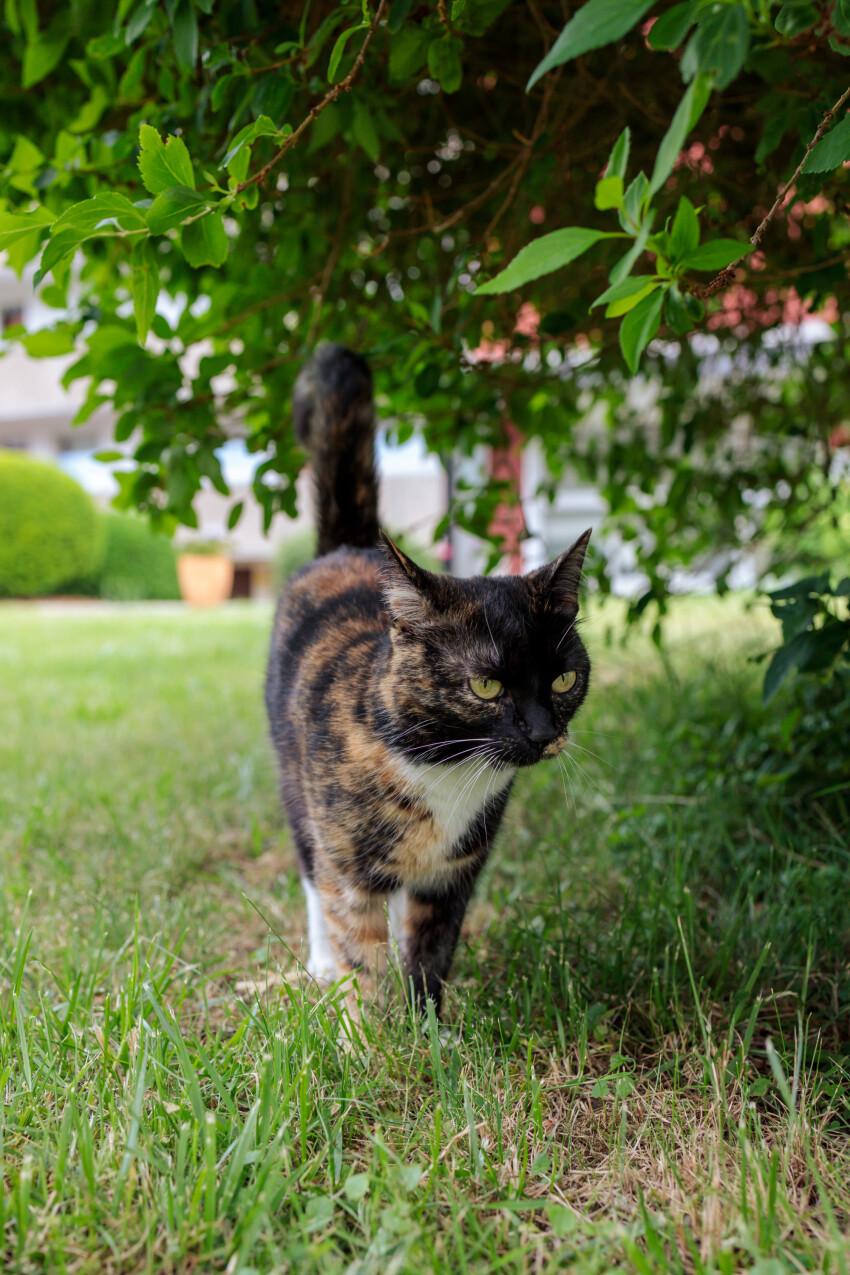 Cute cat under a tree