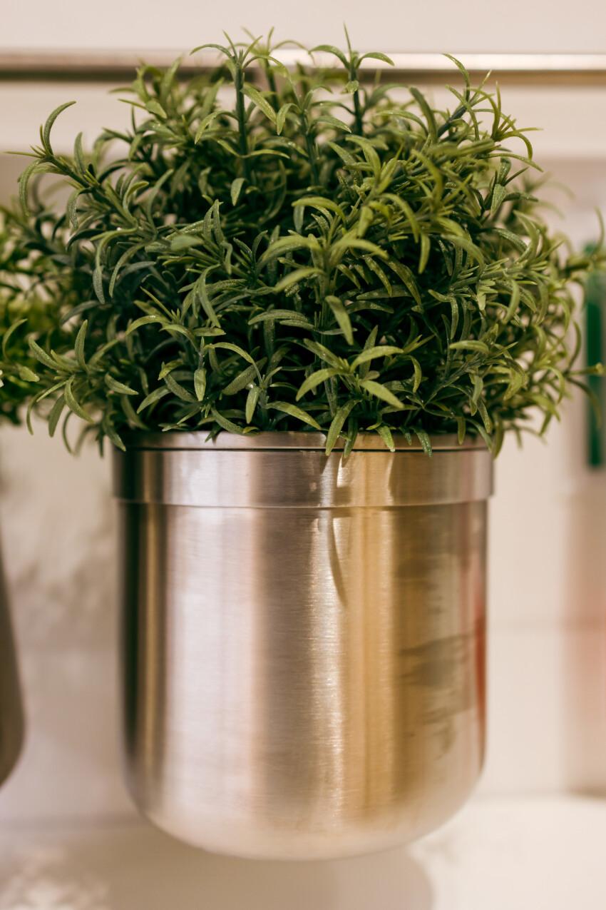Herb pot in the kitchen
