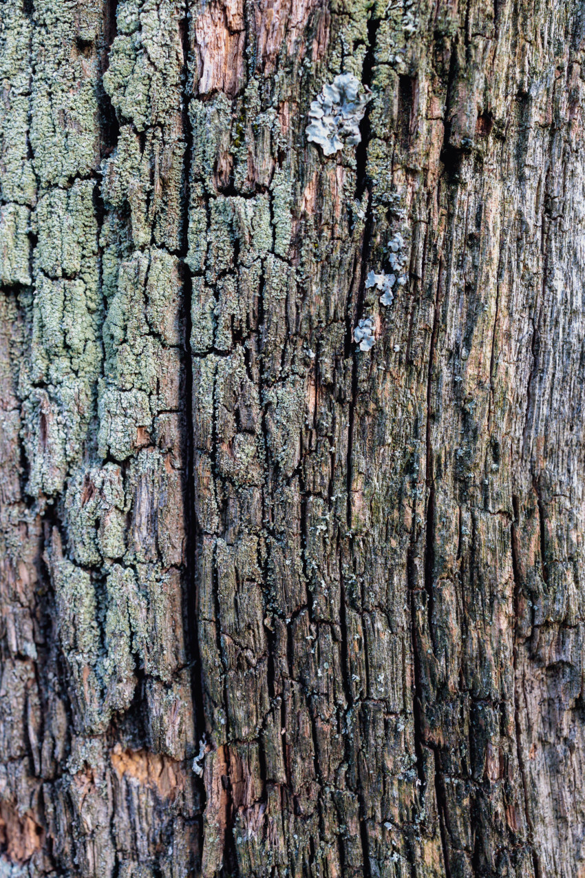 Rotting wood texture