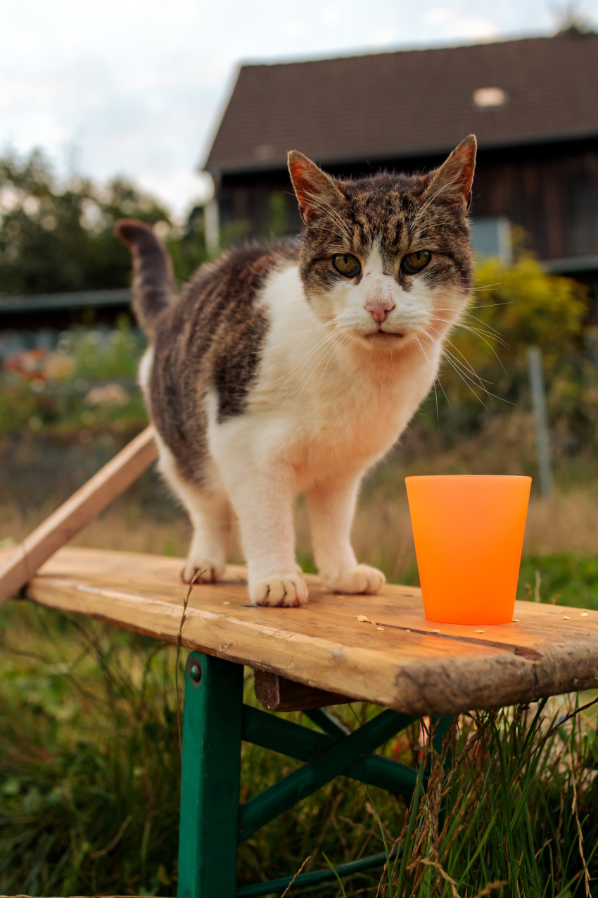 Cat on a beer bench