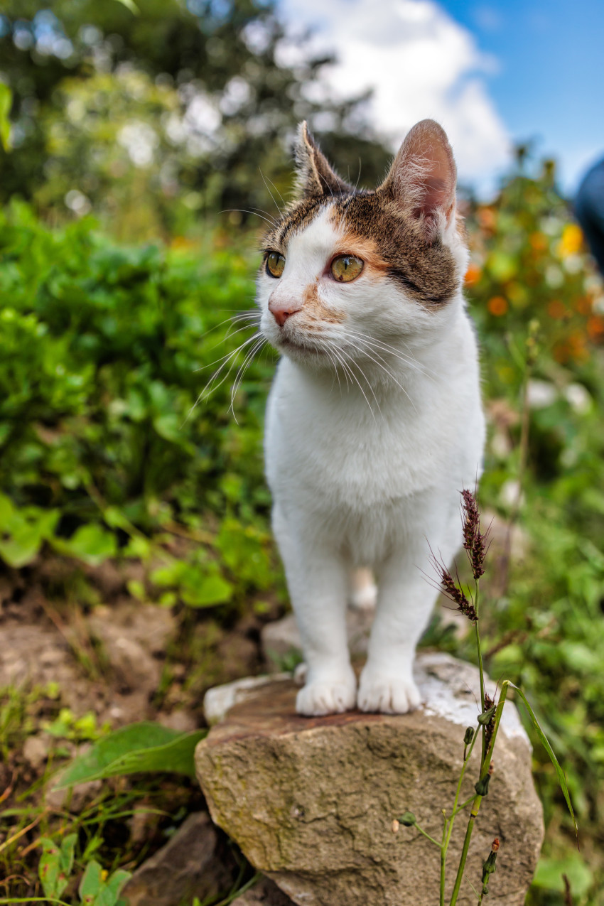 Cute house cat sitting on a stone in the garden