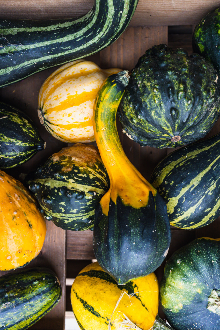 Colourful pumpkins in a wooden box