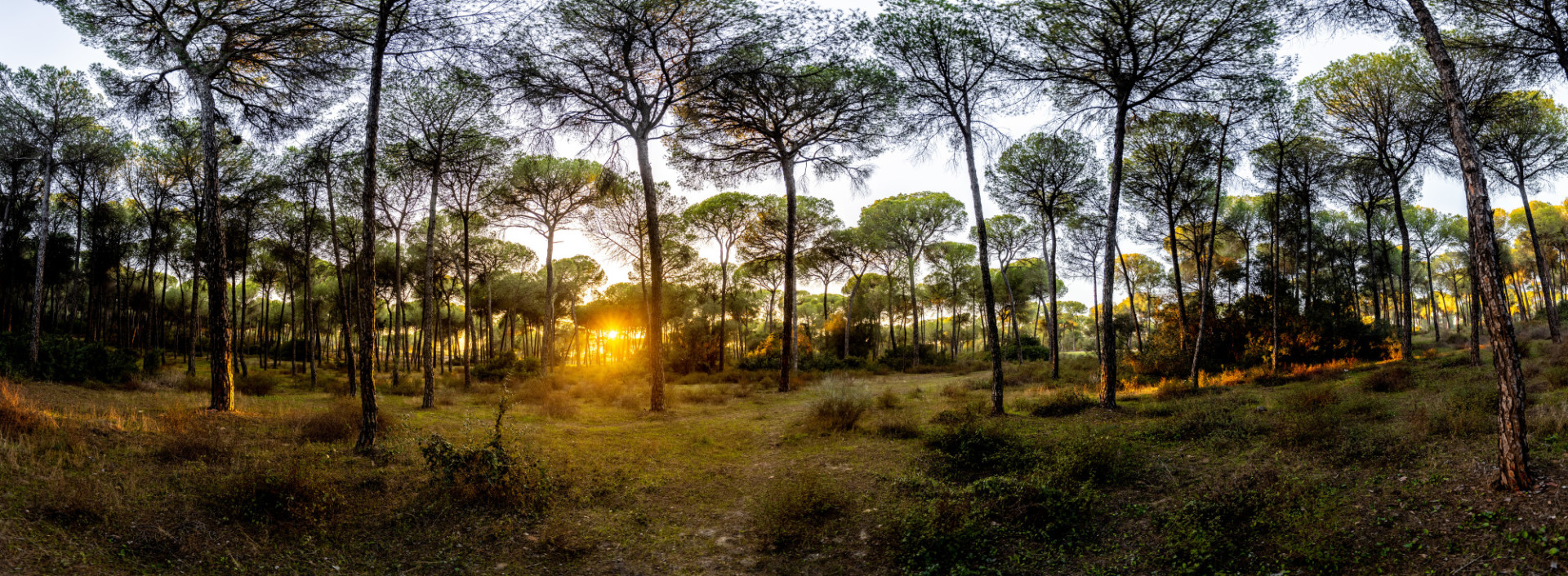 Andalusia forest landscape