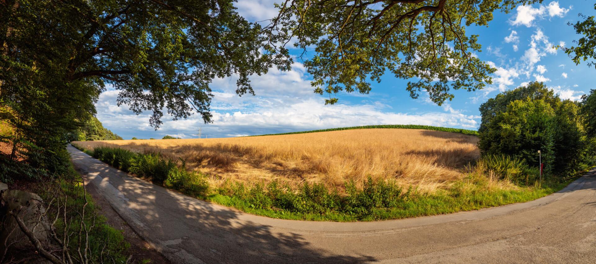 Idyllic German Country Road