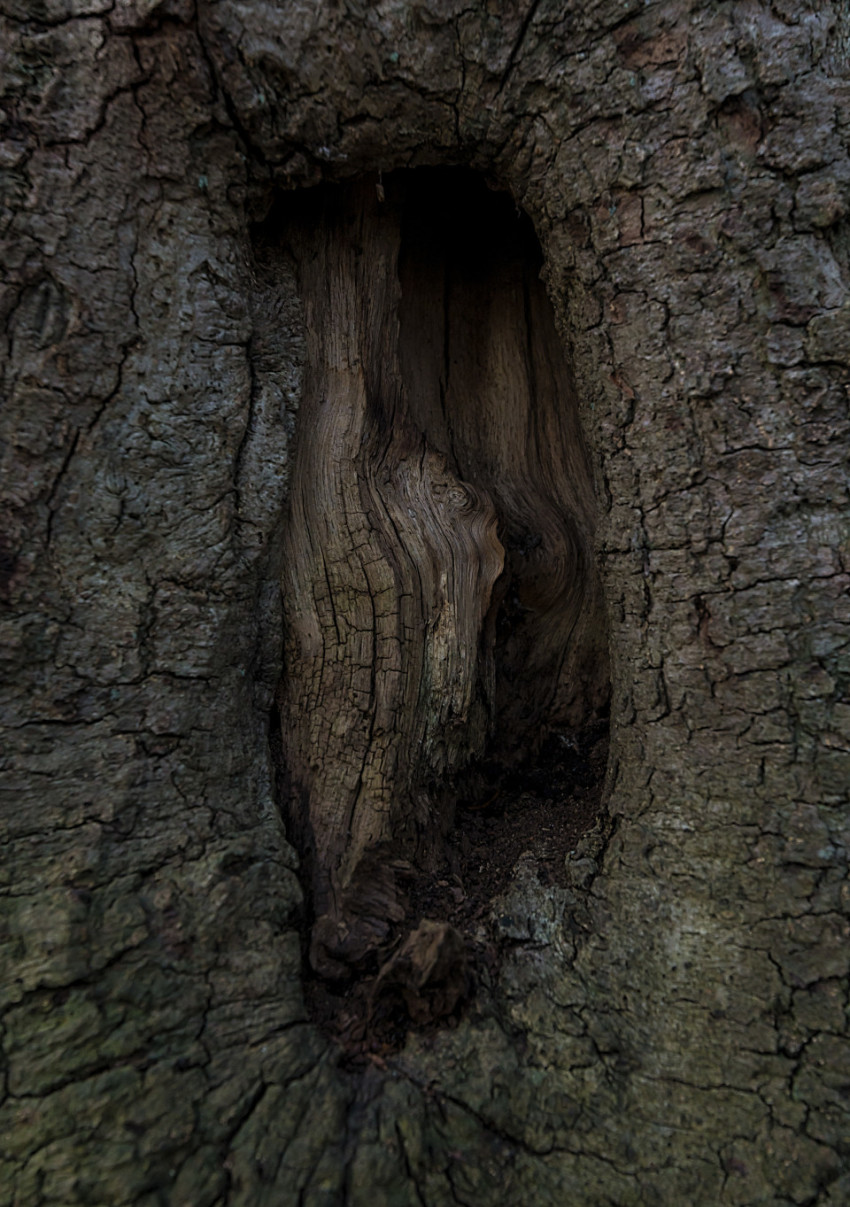 hole bark tree texture